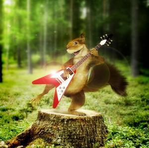 Pikku-Orava